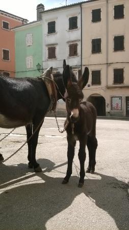 Vodnjan, Croacia: Istrian donkeys at the Ecomuseum
