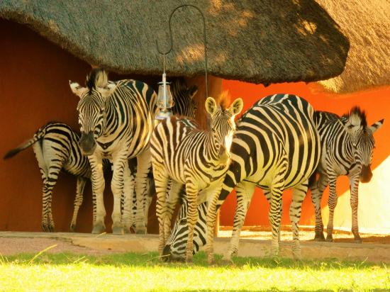 Waterberg, Sudáfrica: Close to nature as possible