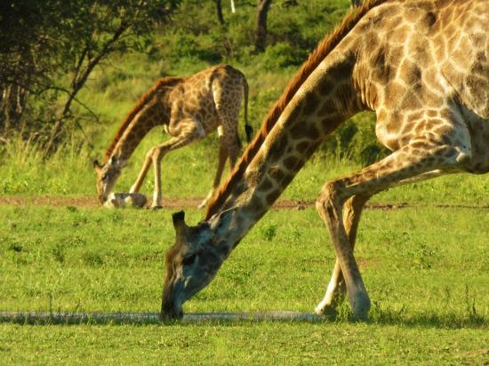 Waterberg, Sudáfrica: Animals around you in lodge
