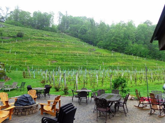 Banner Elk, NC: New grape vines budding for this year's crop