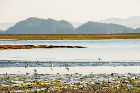 Port Hardy, Canadá: Early morning on the beach in front of Pier Side Landing.