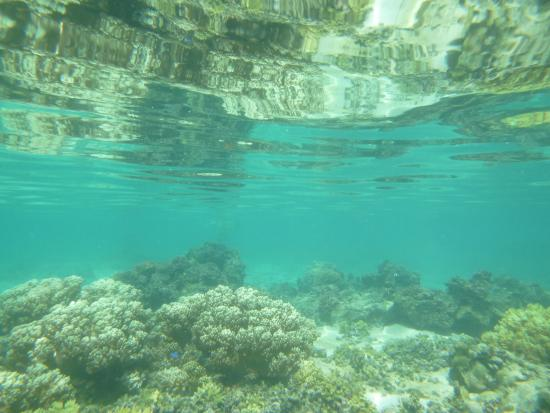 Va-i-Moana Seaside Lodge: Lagoon snorkeling on island