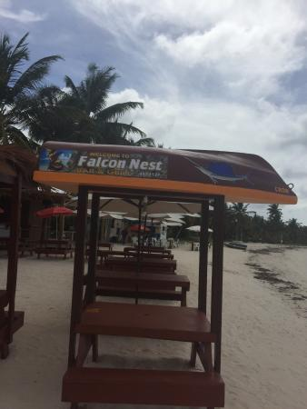 Island Harbour, Anguilla: I  am not to small to say well come to falcon nest