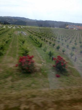 Consort Wine Tours: photo1.jpg