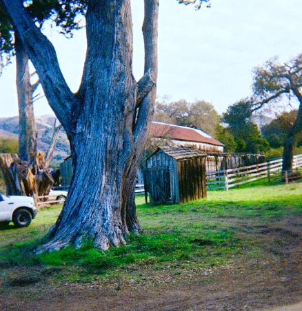 Carmel Valley, CA: Old barn
