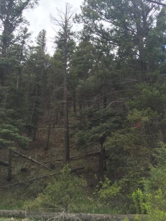 Eagle Nest, NM: trail thru the woods