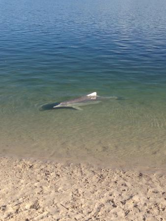 Dolphins at Tin Can Bay visiting Yvette - Picture of ...