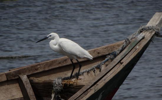 Speke Bay Lodge: At the fishing village