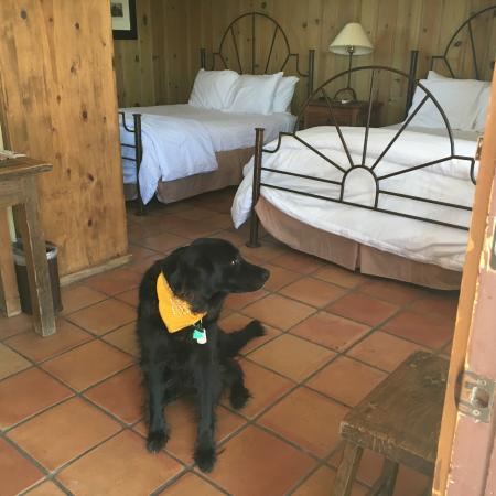 Alpine, TX: Pet-friendly