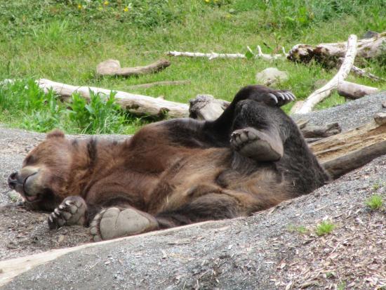 Sitka, AK: Chaik relaxing