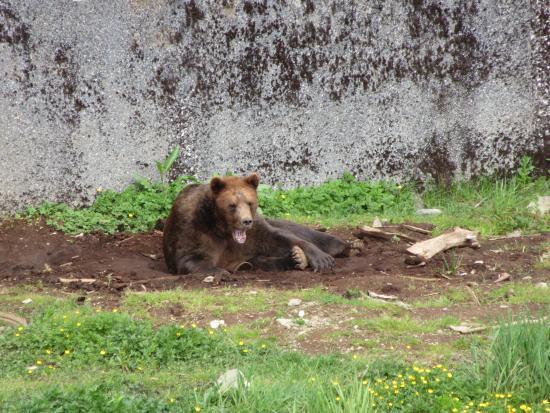 Sitka, AK: Killisnoo waking from a nap