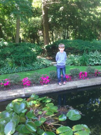 The O'Neil House Bed and Breakfast: Lily pond