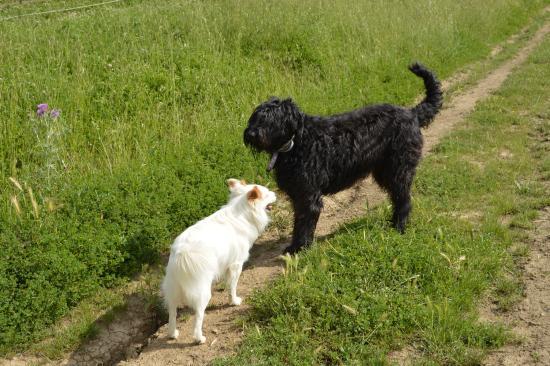 Torrita di Siena, Italien: Family dog Priscilla and her buddy roaming the farm