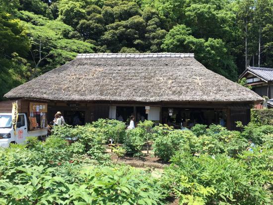 Mobara, Japan: 文化財指定の古民家で、藁葺きの母屋と長屋門の建物かあります。牡丹の季節に開園しています