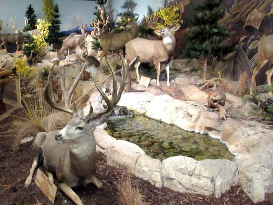 Cabela's (Lehi) - UPDATED 2019 - All You Need to Know BEFORE