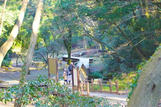 森林 東 公園 高根
