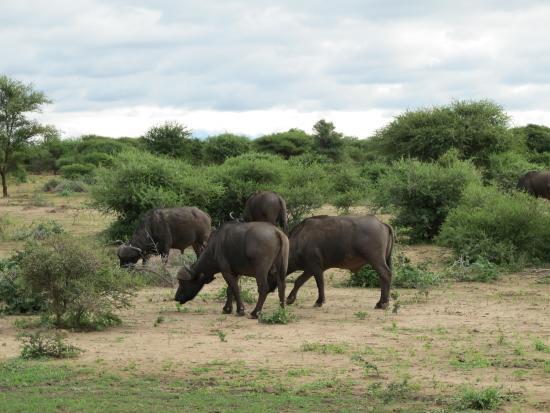 Elandela Private Game Reserve Bild