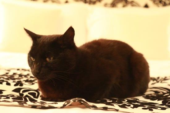Pluckley, UK: Betty the cat...she may decide to join you!