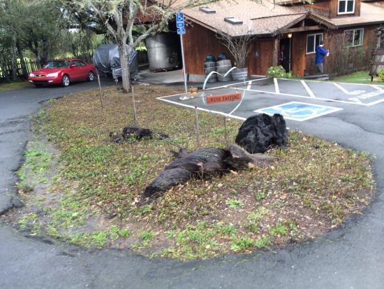 Philo, Kalifornia: Parking Lot View