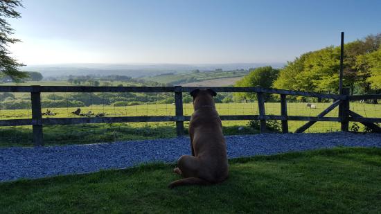 Brechfa, UK: Khaeesi watch ing the view's