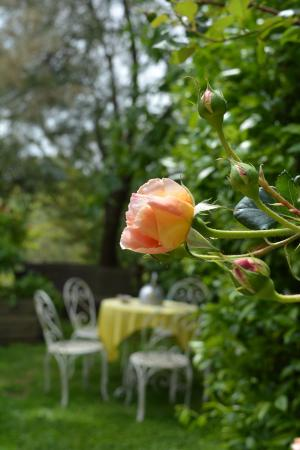 Magliano Sabina, อิตาลี: dettaglio giardino