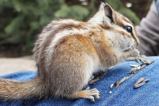 Nathrop, Колорадо: One of the cutie pies sitting on my leg