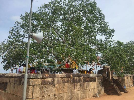 Mannar, Sri Lanka: IMG-20160422-WA0210_large.jpg