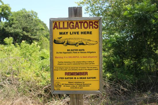 Port Royal, SC: Do not feed the alligators