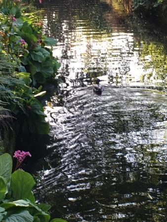 Victoria Park: photo1.jpg