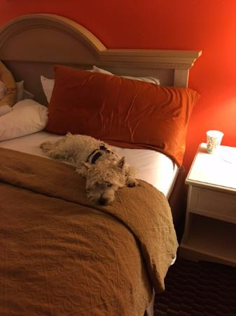 Quality Inn & Suites: King Size Bed,