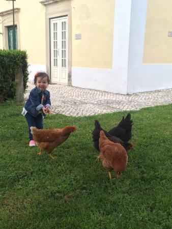 Algueirao - Mem Martins, Portugal: Photos from our beautiful visit!