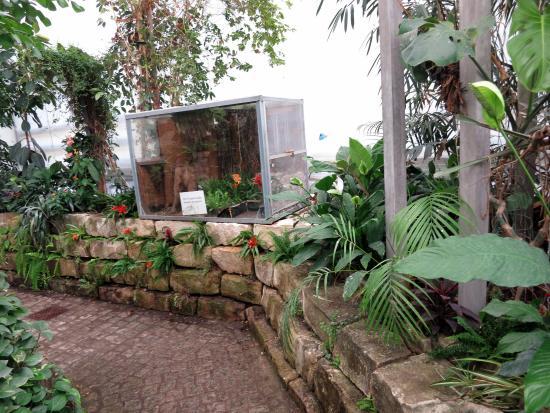 Butterfly House Elbauenpark: Schmetterlingshaus mit tropischer Pflanzenwelt