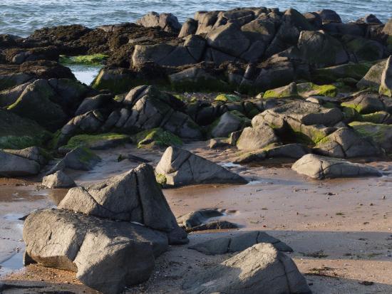 Longniddry, UK: Rocks and rock pools