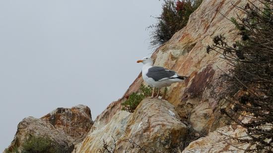 Avila Beach, CA: bird on the ledge just outside of the cave