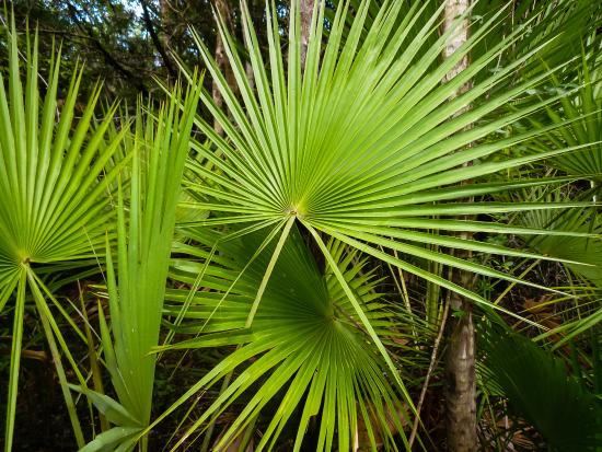 Distretto del Belize, Belize: Naturpfad in der Anlage