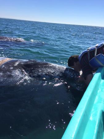 Baja Ecotours: whale kiss