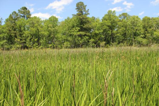 Georgetown, Carolina del Sur: This used to be a rice plantation. Today nature has taken over.
