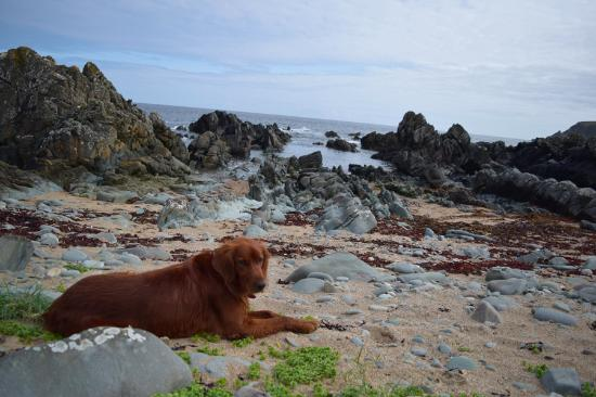 Lecemy, Irlanda: Finn on the beach