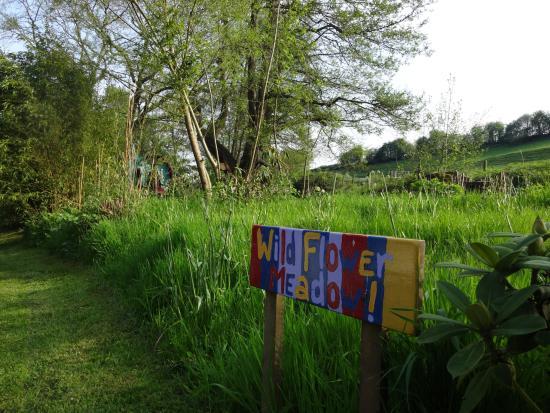 Hoarwithy, UK: wildflower 1