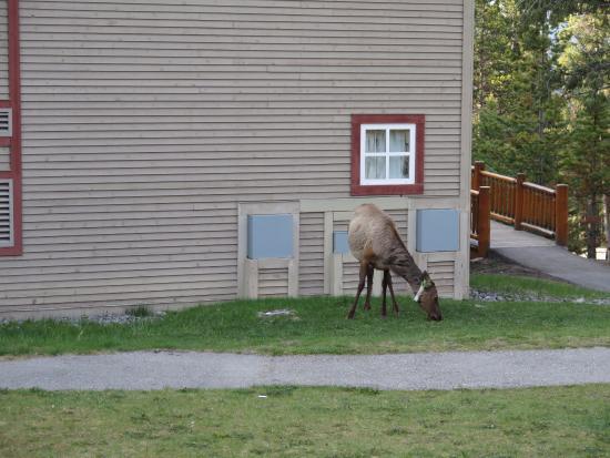 HI-Banff Alpine Centre 사진