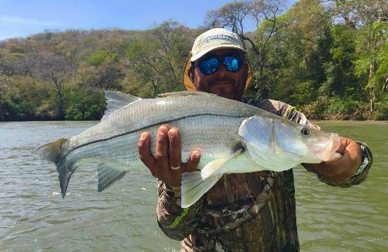Snook fishing four seasons hotel costa rica picture of for Costa rica fishing season