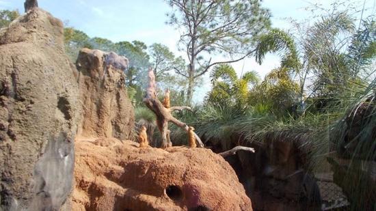 Μελβούρνη, Φλόριντα: There is a special lookout tunnel for children to view the meerkats.