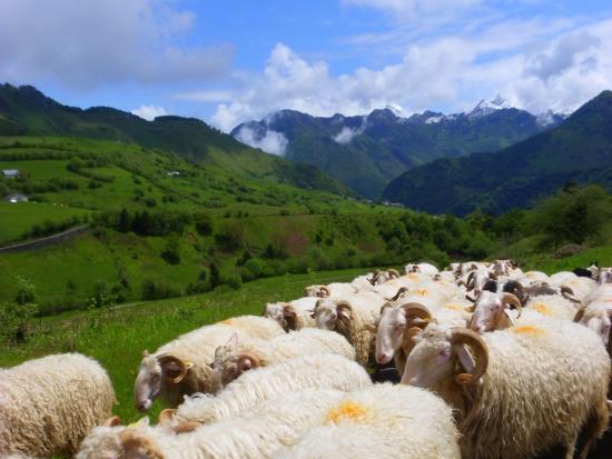 Hébergements du Pic d'Anie : Environs de Lescun