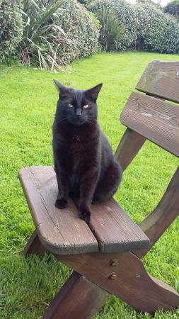 Saint Gennys, UK: Derek the farmhouse cat
