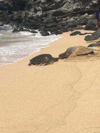 Paia, Χαβάη: Stunning beach