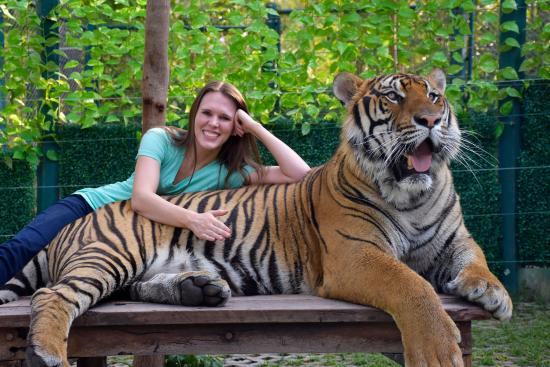 Tiger Kingdom - Chiang Mai - Picture of Tiger Kingdom ...