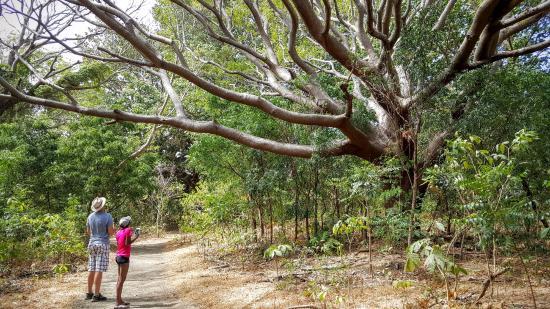 Playa Yankee, Nicaragua: Ometepe