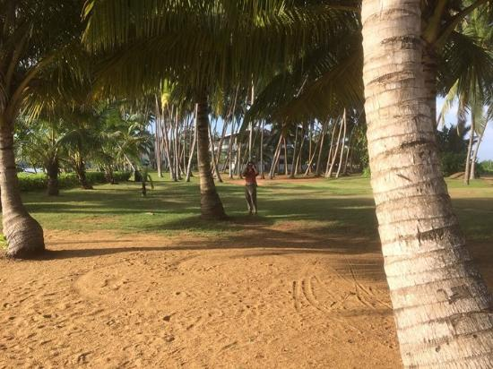 Kalutara, Sri Lanka: The view from my window
