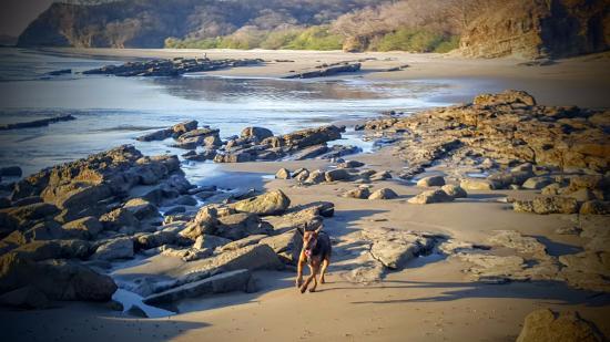 Playa Yankee, Nikaragua: Chiquita! The resort dog.
