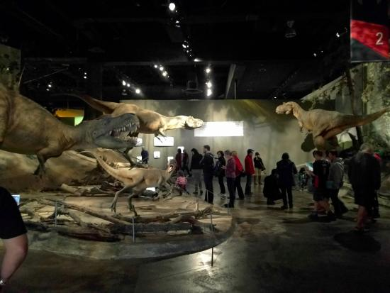 Royal Tyrrell Museum: First area